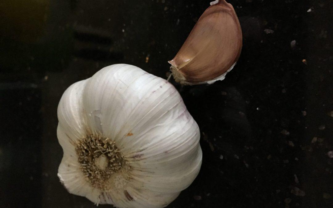 Czosnek – Naturalny antybiotyk i nie tylko….